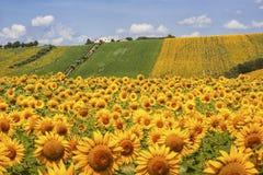 国家风景在3月(意大利) 免版税库存照片