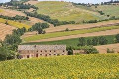 国家风景在3月(意大利) 免版税库存图片