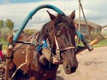 国家马的马鞔具大画象 免版税库存照片