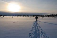 国家(地区)交叉滑雪冬天 免版税图库摄影