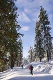 国家(地区)交叉滑雪者 免版税库存照片