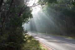 国家(地区)有雾的路 库存照片