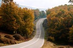 国家(地区)森林公路 免版税库存图片