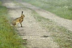 国家(地区)横穿野兔运输路线 库存图片