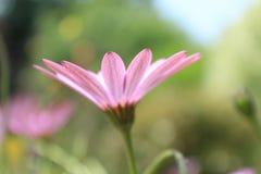 国家(地区)英国花园 库存图片