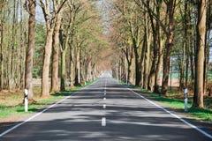 国家(地区)被排行的路结构树 免版税图库摄影