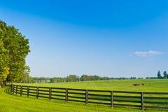 国家(地区)风景。 夏天横向。 免版税库存图片