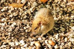 国家(地区)鼠标 免版税库存图片