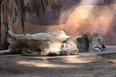 国王和女王/王后睡眠 库存照片
