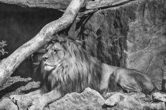国王的国王 免版税库存图片