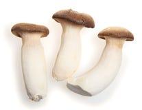国王蘑菇牡蛎 库存图片