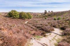 国立公园Posbank Veluwe荷兰 库存图片