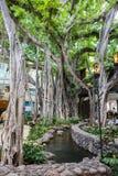国际市场地方在檀香山 免版税库存照片