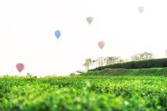 国际气球节日Singkhaek茶园,清莱 免版税库存照片