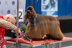 国际狗化妆竞争在Sant安东尼de卡隆赫在西班牙, 19 05 2018年,西班牙 库存照片