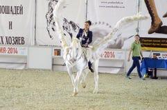 国际马展示 在一个白马的女性车手 佩格瑟斯 蓝色白色服装翼的妇女骑师 库存照片