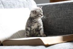 图书馆小猫 免版税库存图片