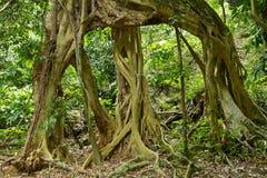 图大根结构树 库存照片