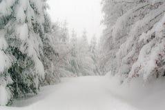 图林根州的冬天森林 库存图片