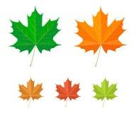 图标叶子槭树向量 库存图片