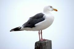 图标式的海鸥 免版税库存图片