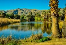 图森,亚利桑那绿洲公园 免版税库存图片