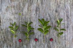 图片由叶子和莓果做成 免版税库存照片
