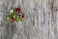 图片由叶子和莓果做成 图库摄影