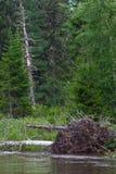 图画现有量横向结构树 西伯利亚的北部的河 俄国 免版税库存图片