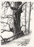 图画结构树 向量例证