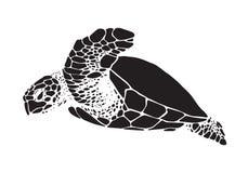 图表海龟,传染媒介 库存图片