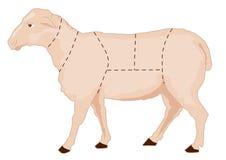 图表绵羊 库存照片