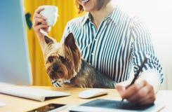 图表设计师工作在有数字式铁笔的办公室的在背景显示器计算机上,微笑使用与狗的行家经理笔 库存照片