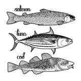 图表鱼收藏 库存照片