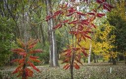 图象充满秋天色的树 库存照片