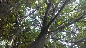 图象自然树 免版税库存照片