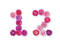 图1和2明亮的翠菊 库存图片