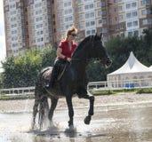 图画女孩马骑术系列导航西方通配 免版税库存图片