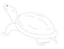 乌龟的彩图T 图库摄影