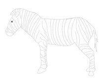 斑马的彩图Z 库存照片