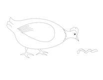 母鸡的彩图H 库存图片