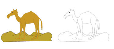 骆驼的彩图C 库存图片