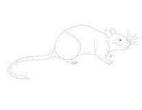 田鼠的彩图V 免版税库存照片