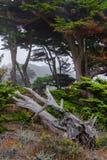 图画现有量横向结构树 免版税图库摄影