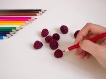 图画莓 库存图片