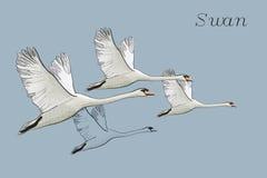 图画飞行天鹅的例证 手拉,与鸟的乱画图形设计 在蓝色背景的对象 免版税库存图片