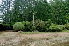 圆日本庭院树植物的绿色 库存照片