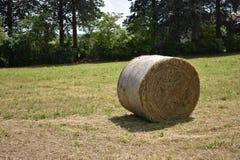 圆柱形干草捆在草甸 库存图片
