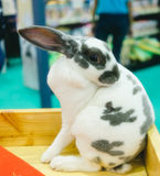 圆点,可爱黑白的兔子 免版税库存图片