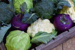 从圆白菜不同的品种的构成在木背景的 花椰菜,撇蓝,硬花甘蓝,白色卷心菜 有机 库存照片